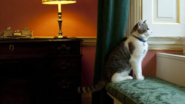 Downing Street Cat Cruelly Banned From Prime Minister's Home