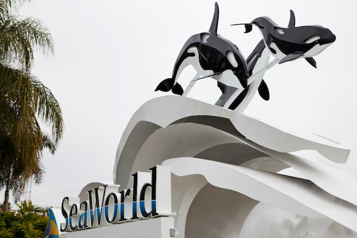 California Assemblyman is Trying to Put SeaWorld Out of Business