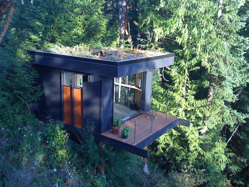 Office on the Forest's Edge