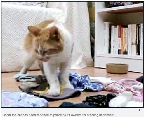 Cat Reported To Police For Underwear Theft
