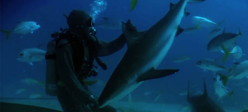 Watch a scuba diver instantly put a shark to sleep with this neat trick