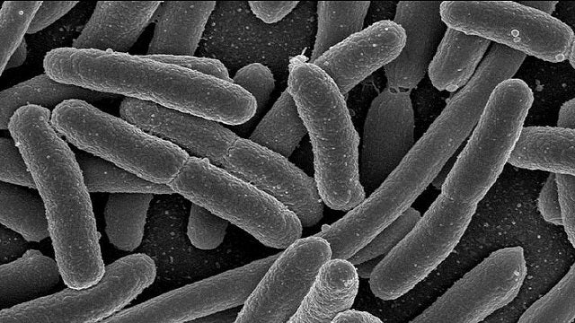 Researchers Build Logic Gates from Bacteria