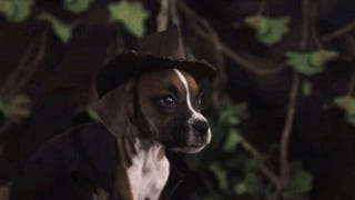 Somebody Remade <i>Raiders Of The Lost Ark</i> With A Dog And It Is Perfection