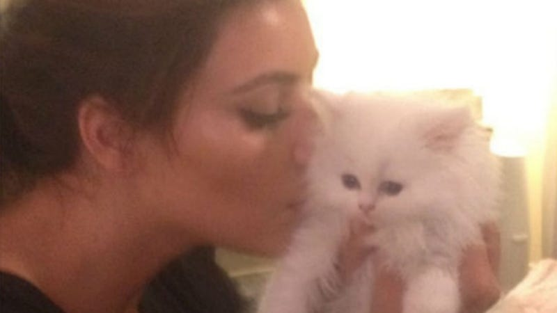 Kim Kardashian's Kitten, Mercy, Has Died