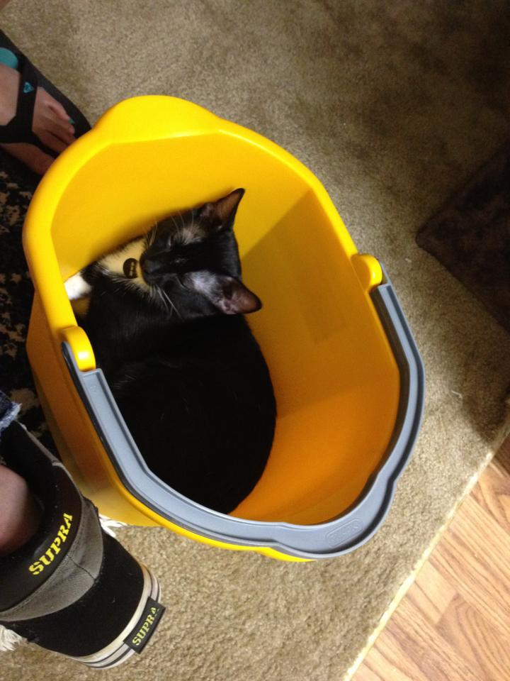 Hey, look, it's my cat Frank!