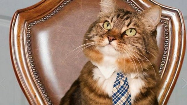 "Hank The Cat, Charles Darwin, And ""None Of These Candidates"" All Had Strong Showings On Election Day"