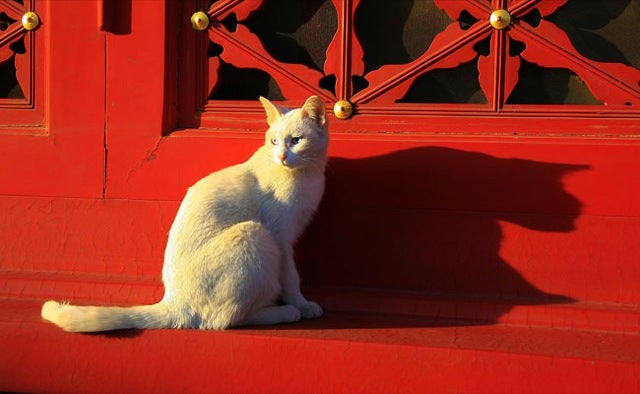 The Cats of China's Forbidden City