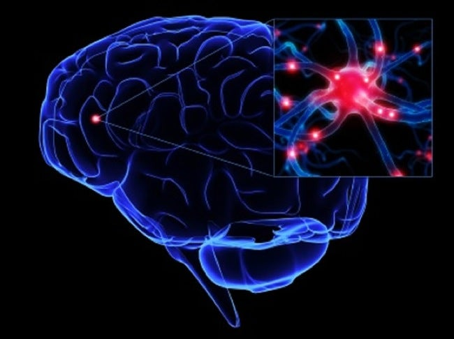 How exactly do neurons pass signals through your nervous system?