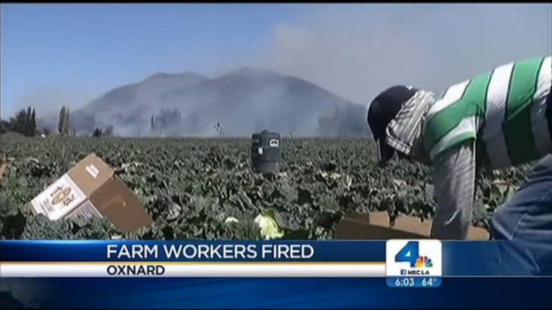 CA Farm Workers Fired for Leaving Field to Escape Fire