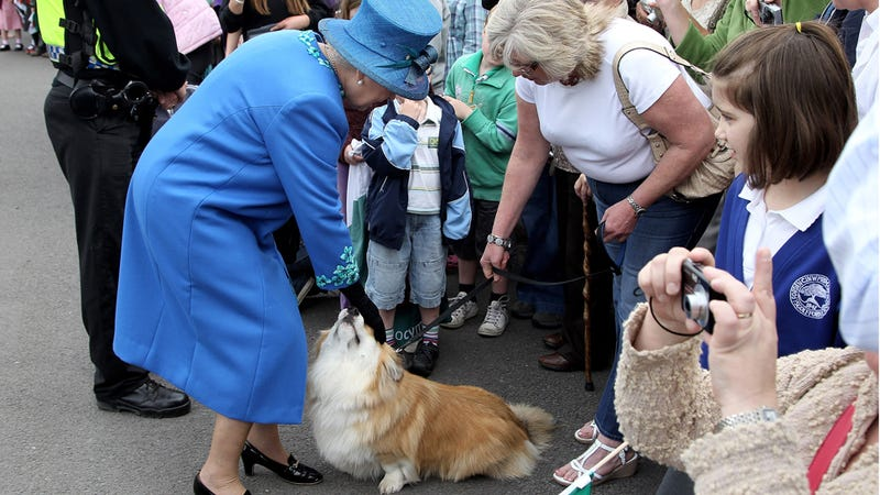 Man in Critical Condition After Queen Hosts Corgi Petting Party