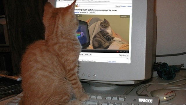 Kitten Watching A Kitten Watching Nyan Cat