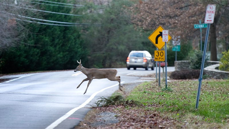 Jalopnik PSA: Deer-Related Car Accidents Spike In November