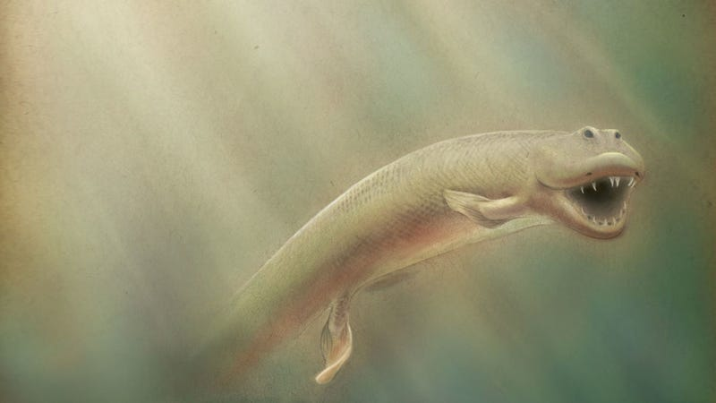 New Discovery Could Explain How Sea Creatures Evolved to Walk on Land