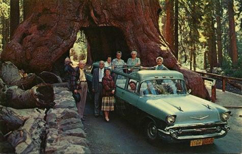 Postcard History: Cars Drive Through Trees