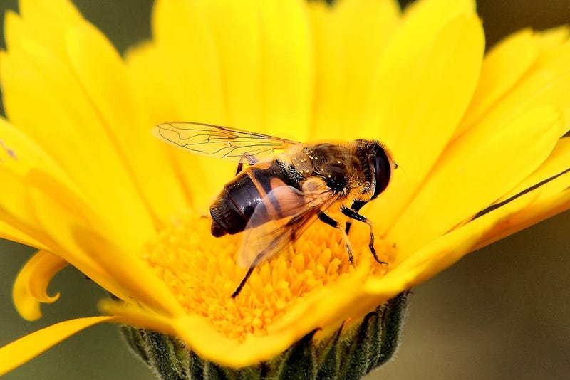 Bees Are Killing Americans. We Are Losing the War on Bees.