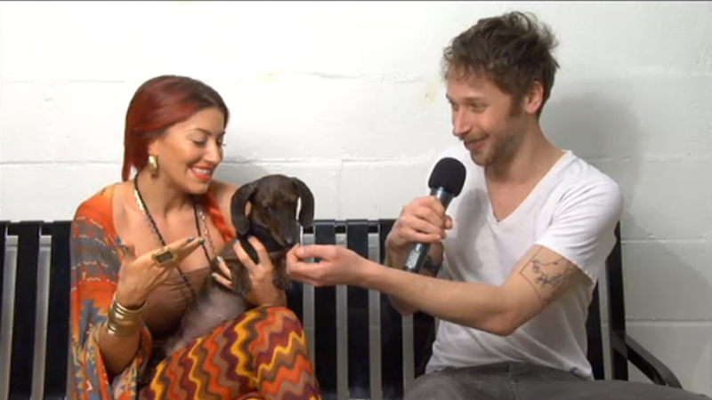 Your Evening Puppy Power: Homotional Rescue Falls in Love with Adoptable Dog Brooklyn
