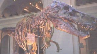 <i>Dinosaur 13</i> tells part of the story of Sue