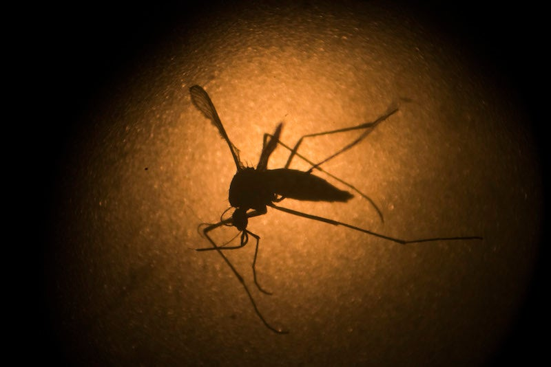 First U.S. Death Related to Zika Virus Reported