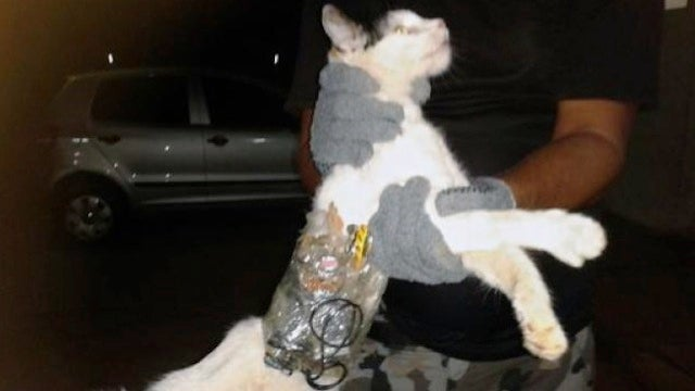 Cat Caught Smuggling Escape Tools Into Brazilian Prison