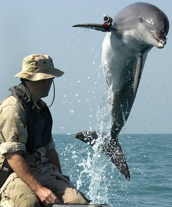 Military Dolphins with Frickin' Guns Attached to Their Heads Have Gone Missing in the Black Sea