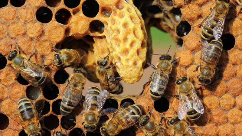 Are Cities Evolving Into Hive Organisms?