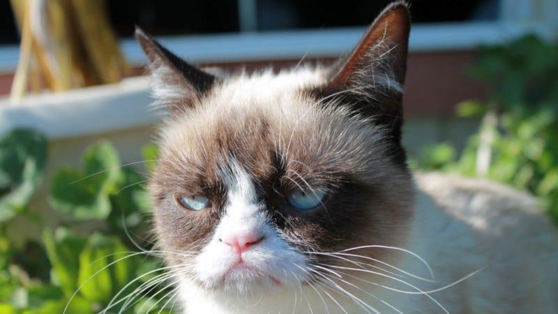 Happy Grumpy Hump Day!