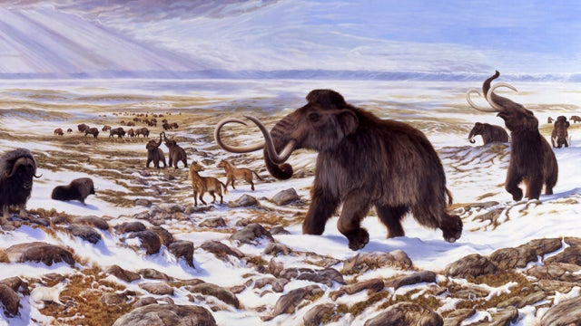 Woolly mammoths went out with a whimper, not a bang
