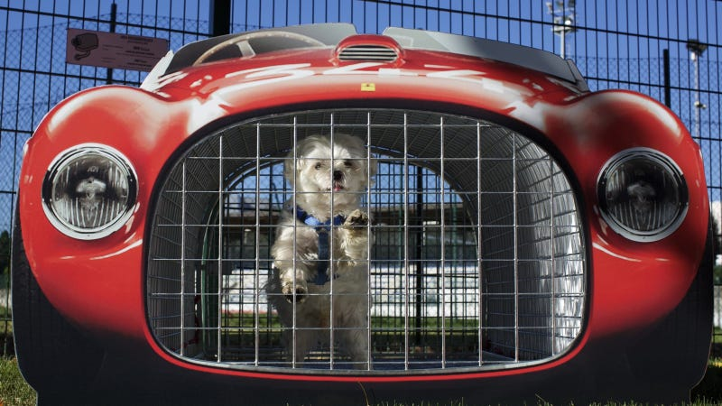 The Most Ridiculous Thing About This Dog In A Ferrari