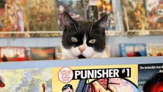 Meet The Feline Guardians Of America's Comic Book Stores
