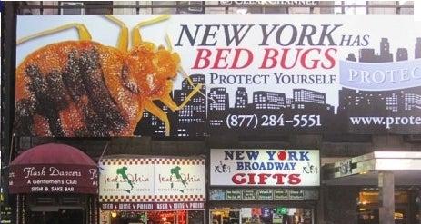 Bedbugs Overrun the Elle Offices