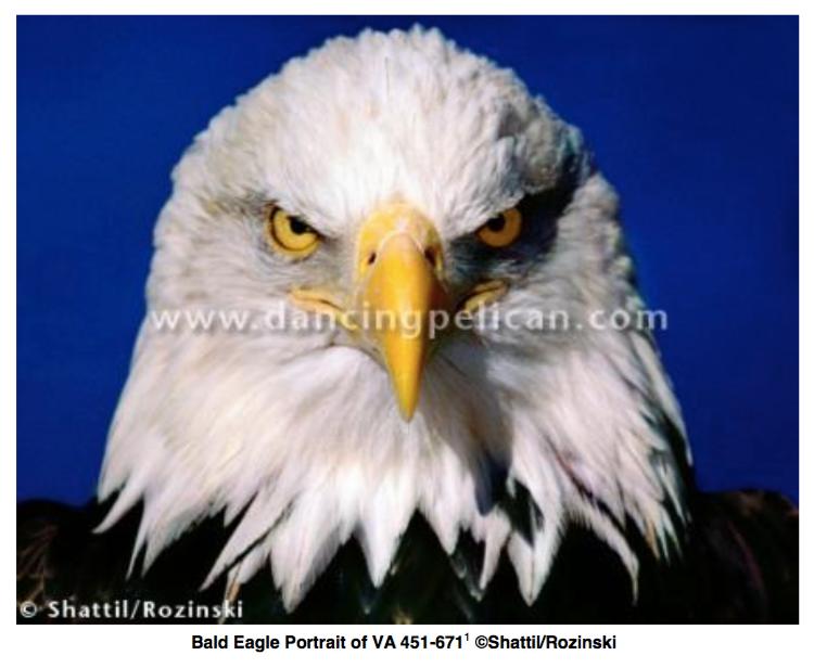 "Donald Trump Settles Copyright Infringement Lawsuit Over ""Piercing, Intimate"" Bald Eagle Portrait"