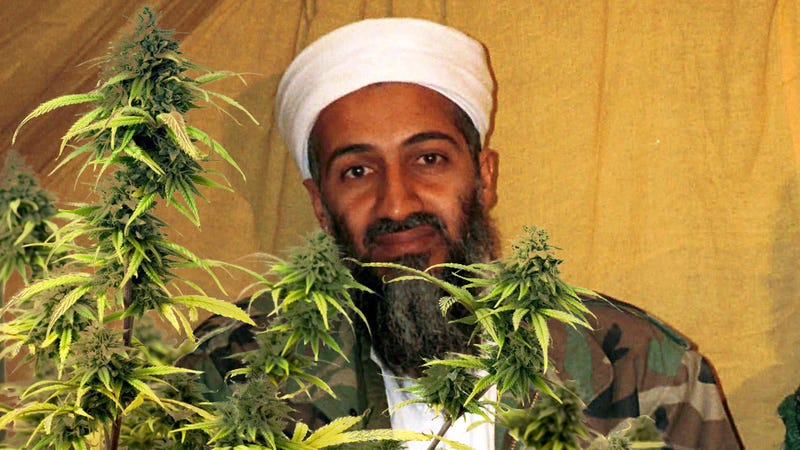 Was Osama Growing Weed?