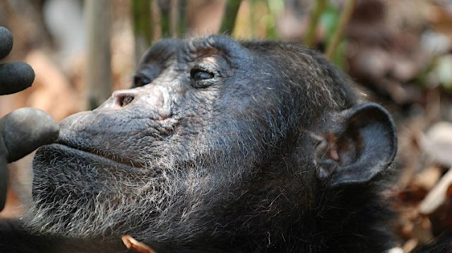 Chimps don't care if someone else gets robbed