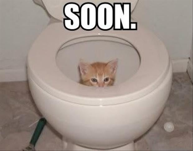 I'm getting a new toilet today!