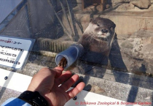 Handshakes Don't Get Much Cuter Than with Otters