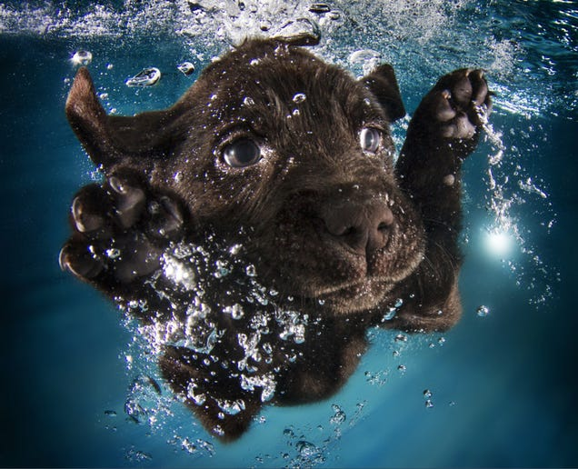There's NOTHING cuter than these puppies swimming underwater