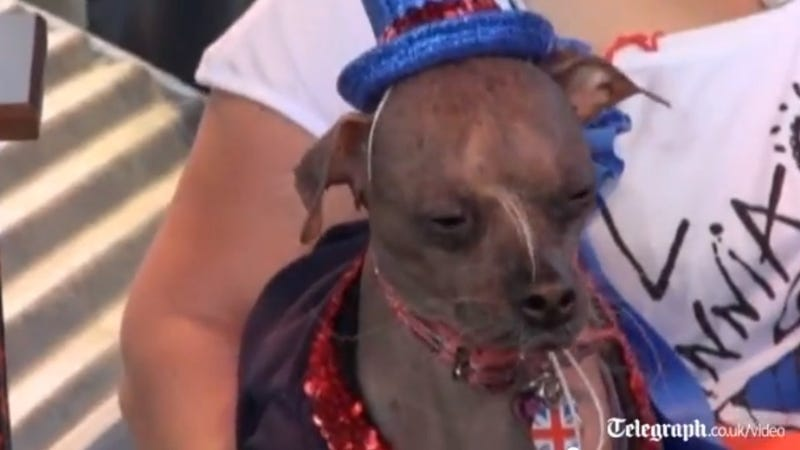 World's Ugliest Dog Is Fucking Ugly