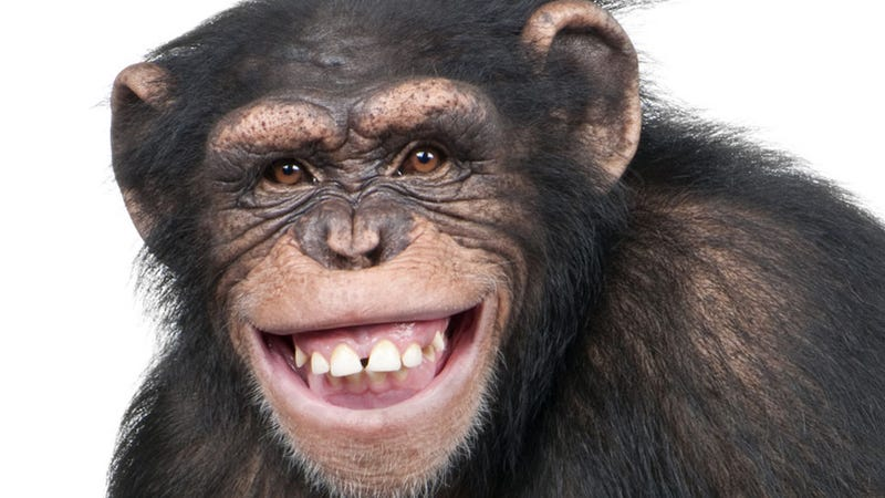 Female Chimps Are Total Bitches to Each Other