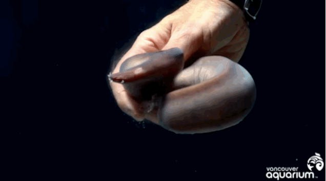We're Only Just Starting To Understand The Miracle Of Hagfish Slime