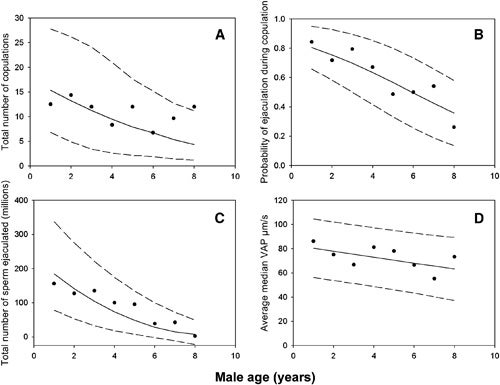 Getting old has its sexual privileges - at least for males