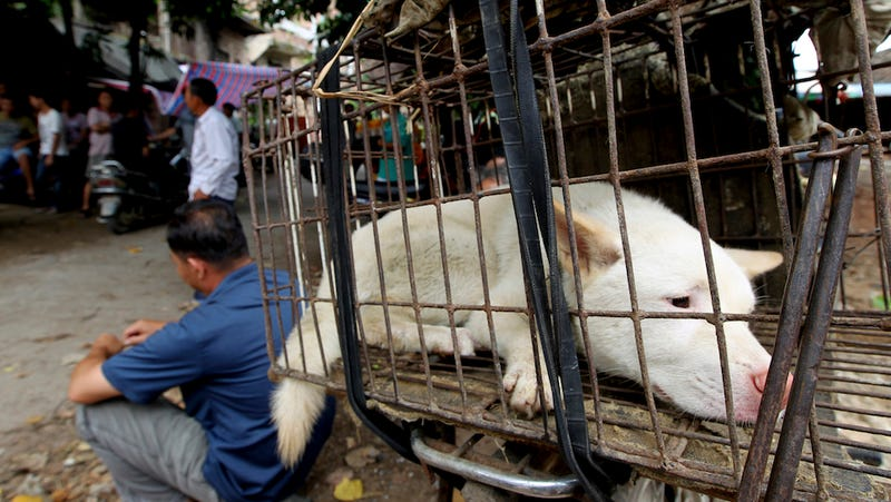 Clever Dog-Eaters Hold Dog-Eating Festival Early to Avoid Activists