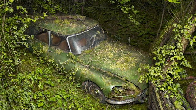 When a Citroën DS Turns Into Forest