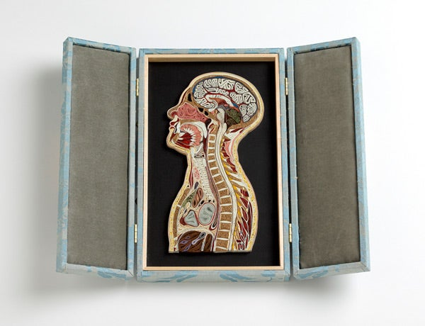 These Crazily Detailed Anatomical Images Are Made With Curled Paper