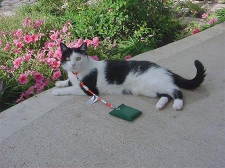 Backyard Cat: A Haiku