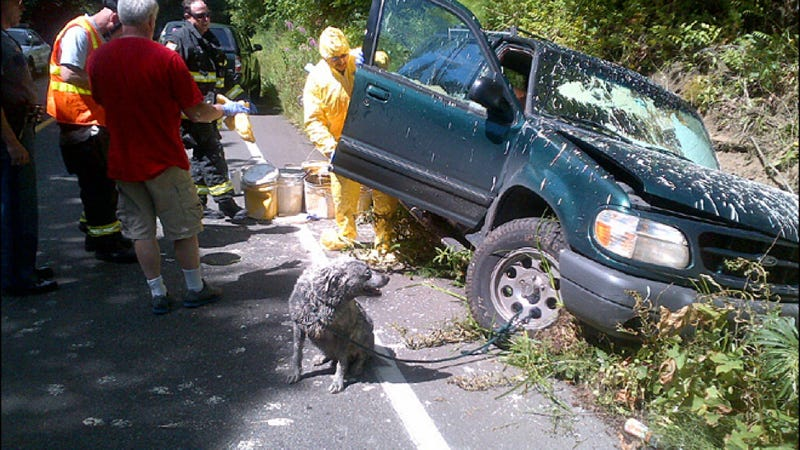 Unfortunate Crash Leaves Man And Dog Coated In Paint