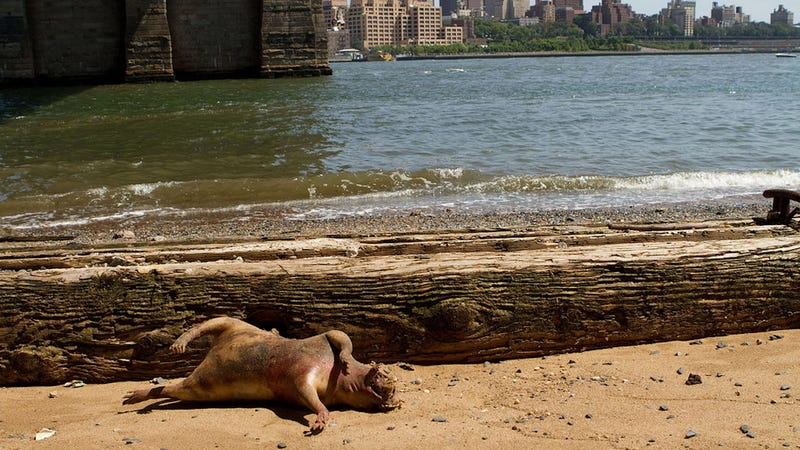 Latest Hell Beast to Wash Up in New York Is Just A Stinky Old Bloated Pig POSSIBLY A HELL BEAST [UPDATE]