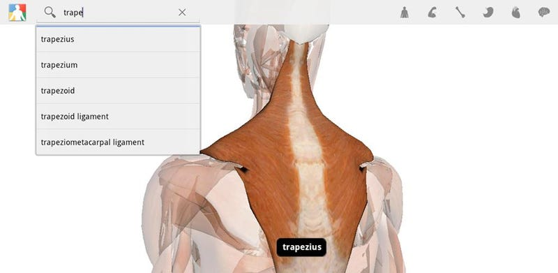 Explore the Human Body in Google's Android Tablet App