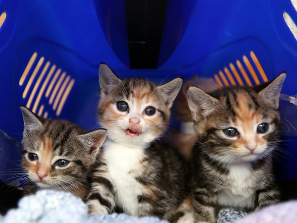 Bomb Squad Sent Out To Defuse A...Box Filled With Kittens
