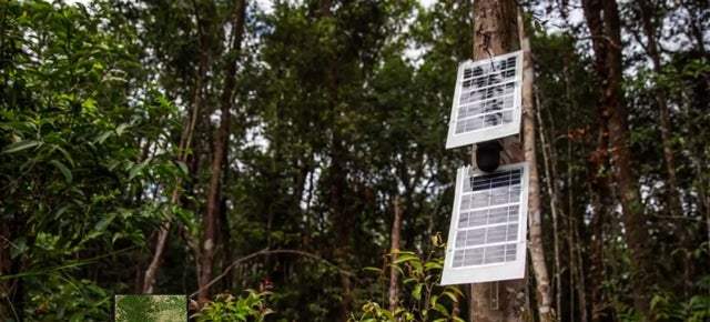 Your Old Phone Could Help Eavesdrop on Illegal Rainforest Loggers