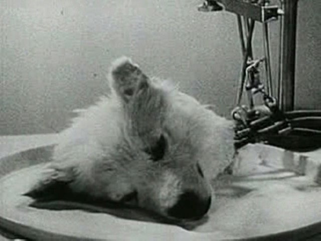 Dog's Head Being Kept Alive via Machine